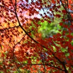 河口湖紅葉まつり【2014年】のみどころ、場所、アクセスを紹介!