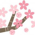桜の名所東京の赤坂、千代田区、大田区にはどんなスポットが!?