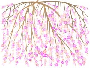 しだれ桜の東京名所でライトアップするのは?見頃はいつ?