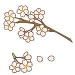 鎌倉の桜の2015年の開花時期は?名所やイベント情報を紹介!